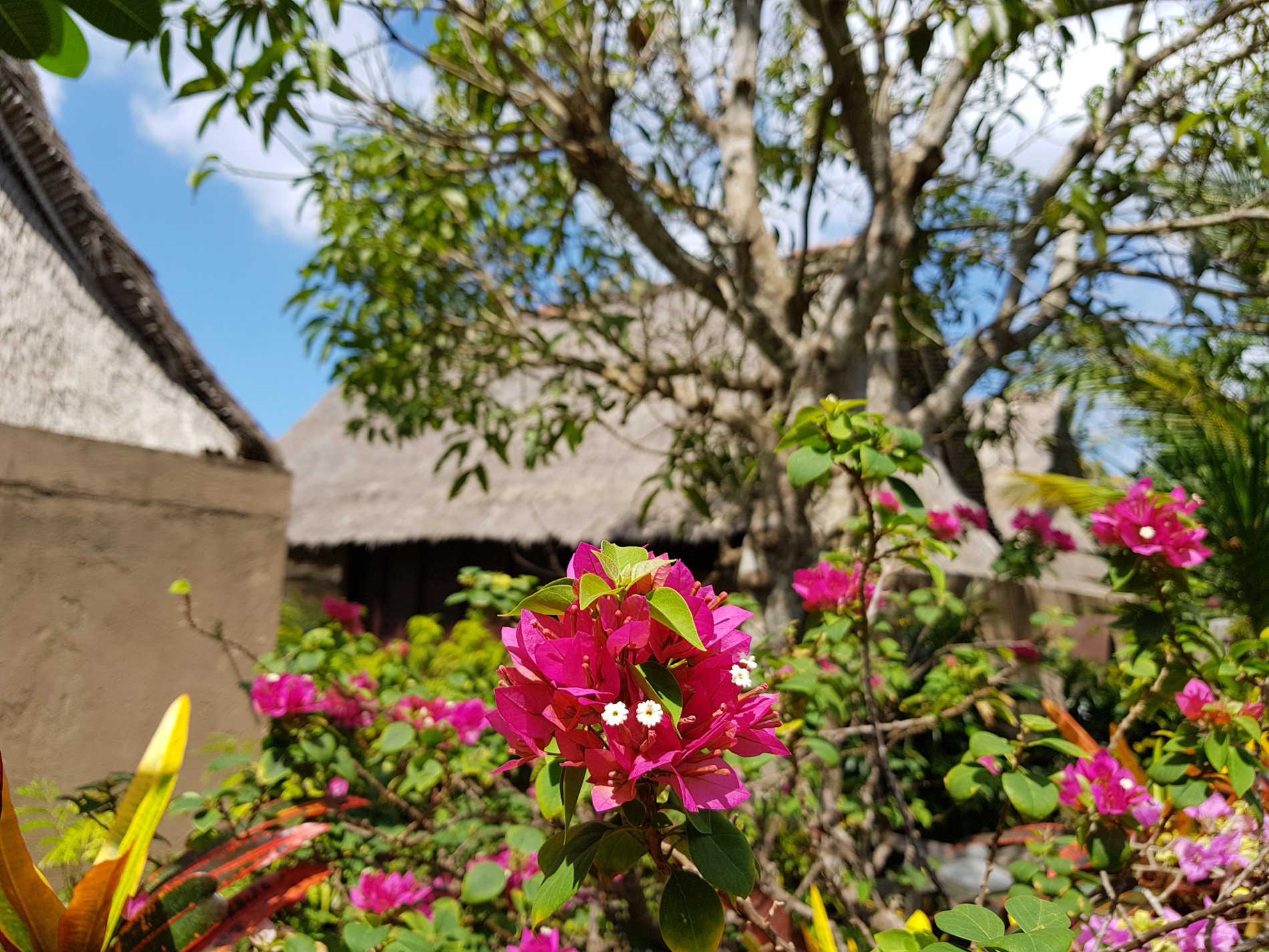 cielo e fiori sono uno dei motivi del perchè andare e cosa fare a Nusa Lembongan   Spunti di Viaggio