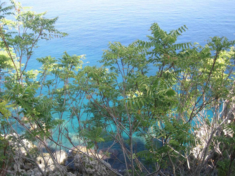 Il Bergamotto di Calabria: narei e montagne di Calabria