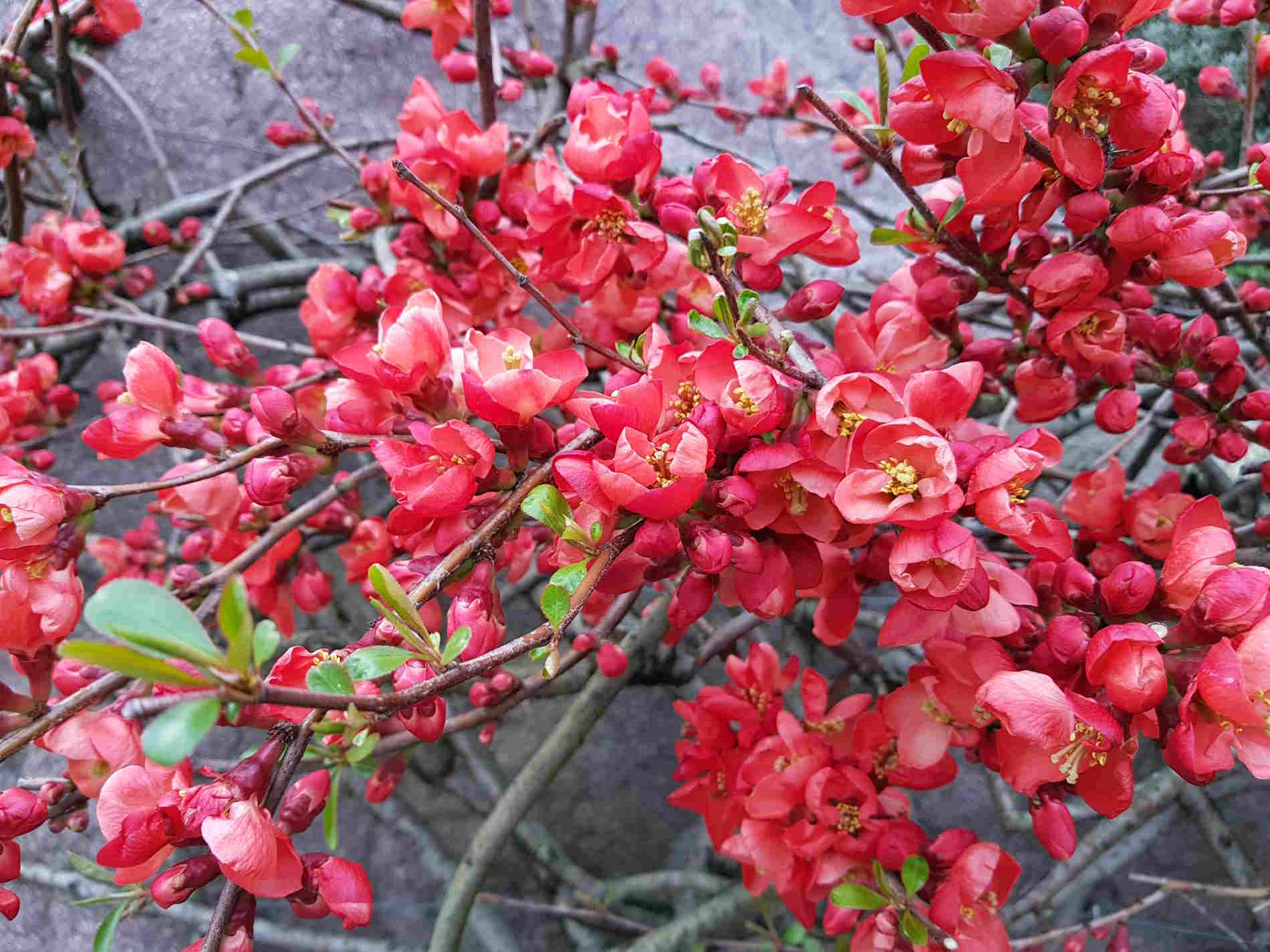Merano: I colori dei Giardini di Castel Trauttmansdorff