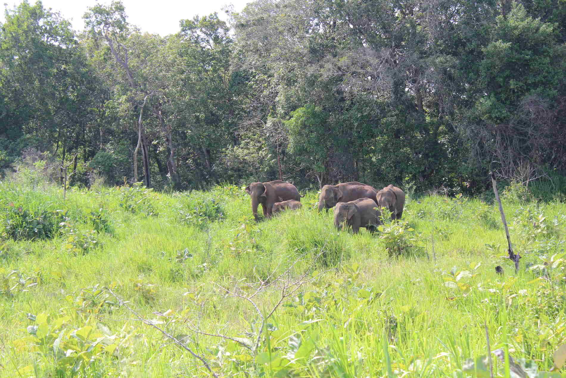 Turismo Sostenibile e Responsabile - Elefanti in libertà all'Urulu Eco Park in Sri Lanka