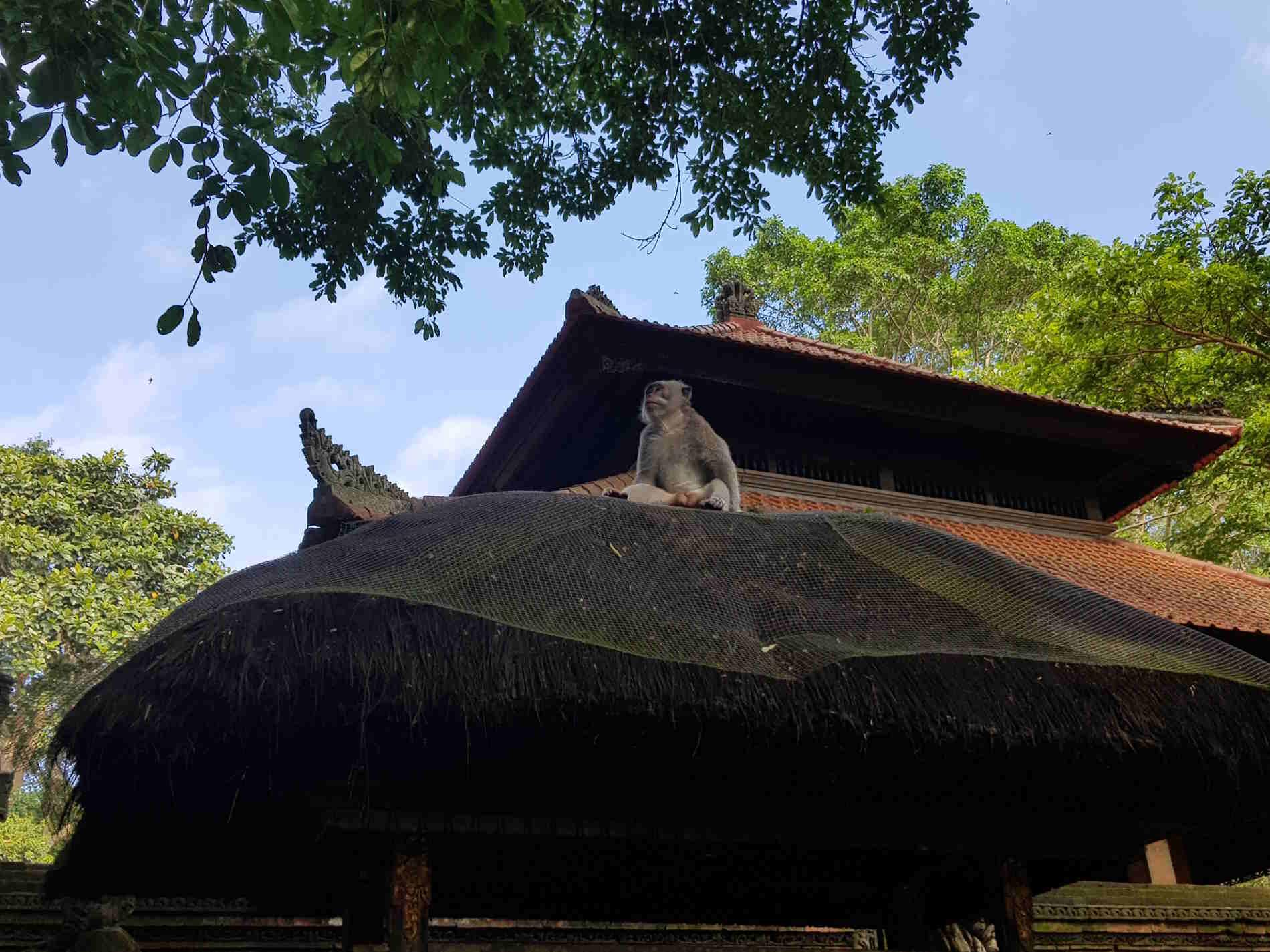 Viaggio a bali - Sacred Monkey Forest a Ubud: La Sacra Foresta delle scimme a Ubud
