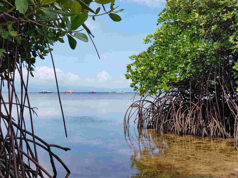 Viaggio a Bali Nusa Lembongab Foresta di Mangrovie