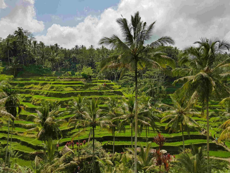 Viaggio a Bali risaie di Telalangan