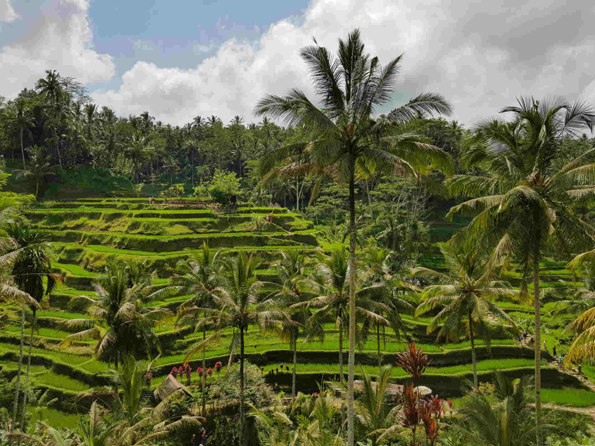 Itinerario a Bali - Le risaie terrazzate sono Patrimonio Culturale UNESCO