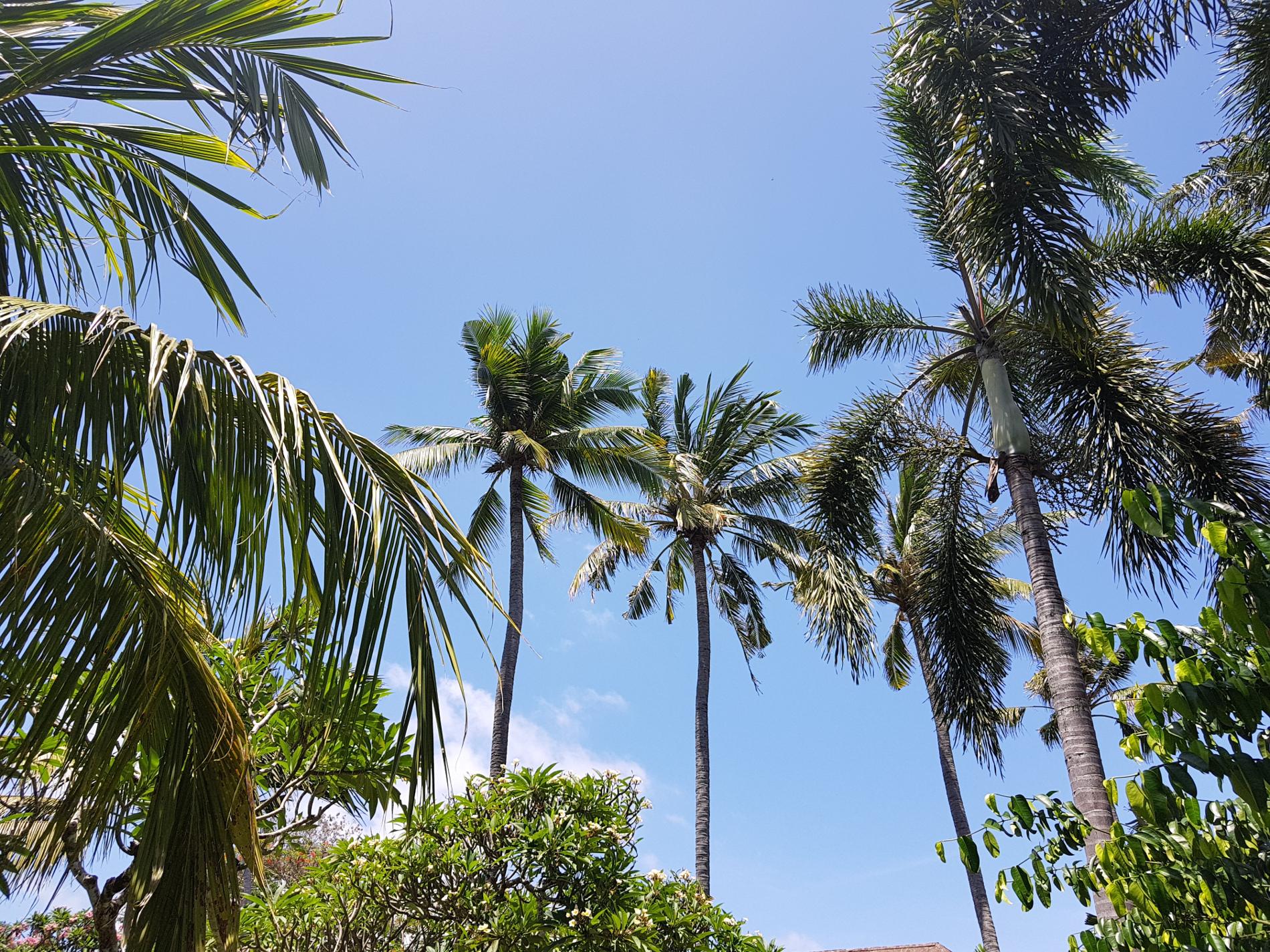 itinerario a Bali un invito a tornare