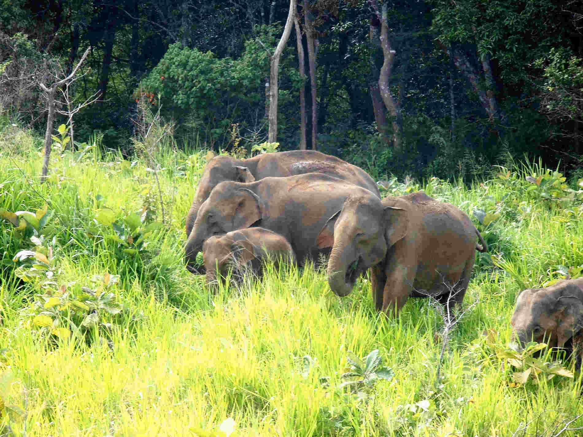 Viaggio in Sri Lanka Minneriya National Park