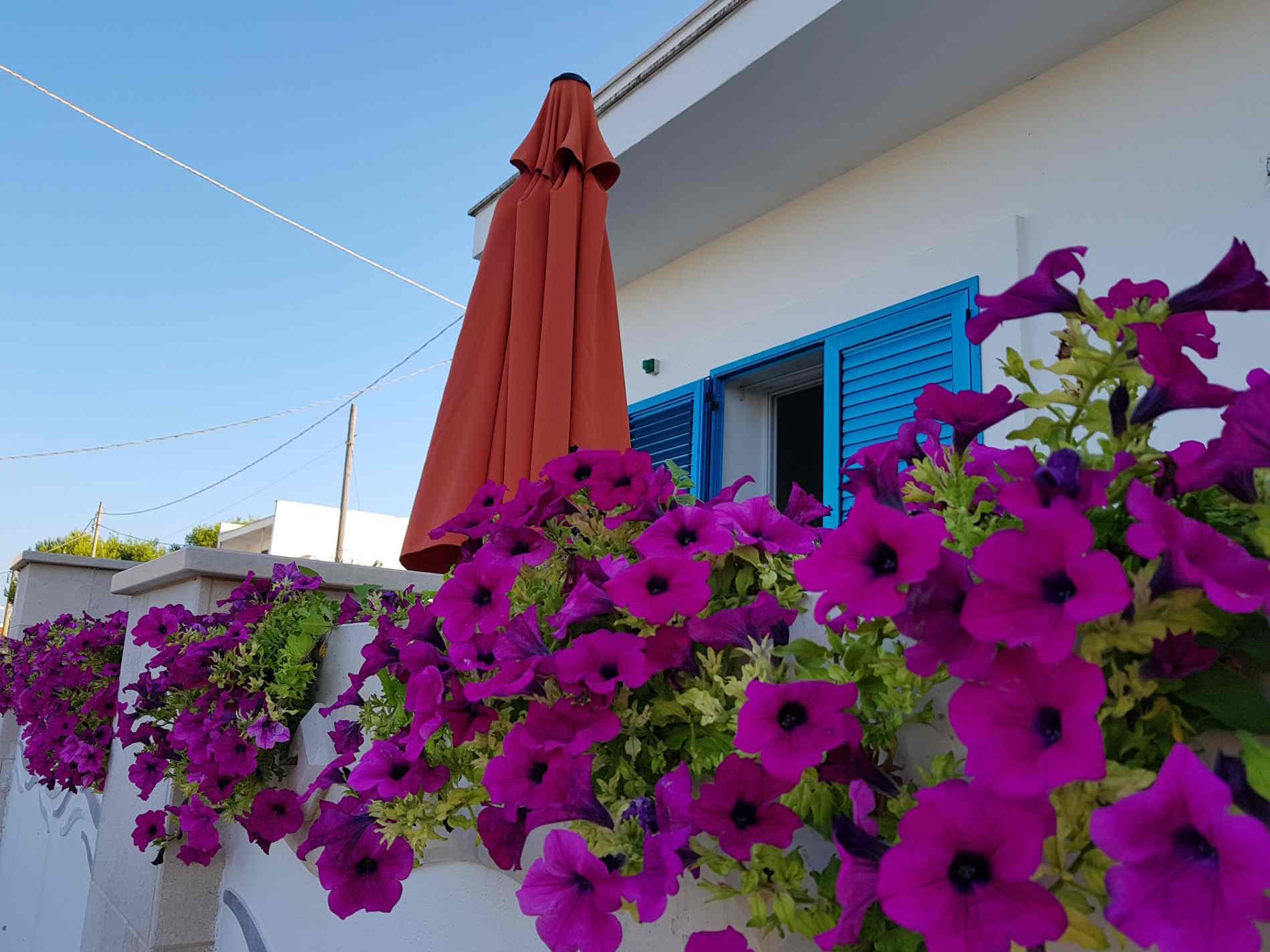 Vacanze in salento alla Maison Blue. verande fiorite