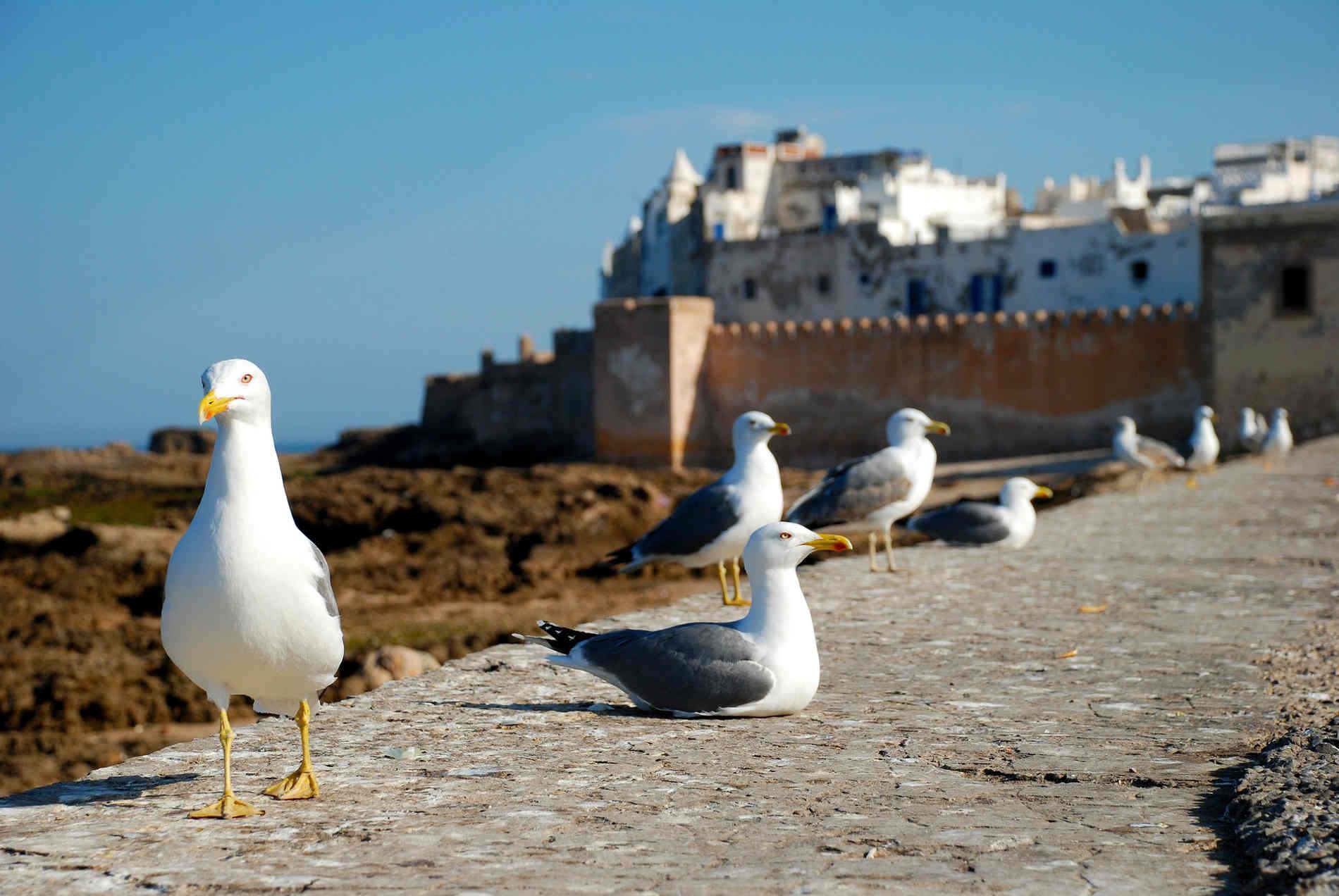medina di Essaouira viaggio in Marocco