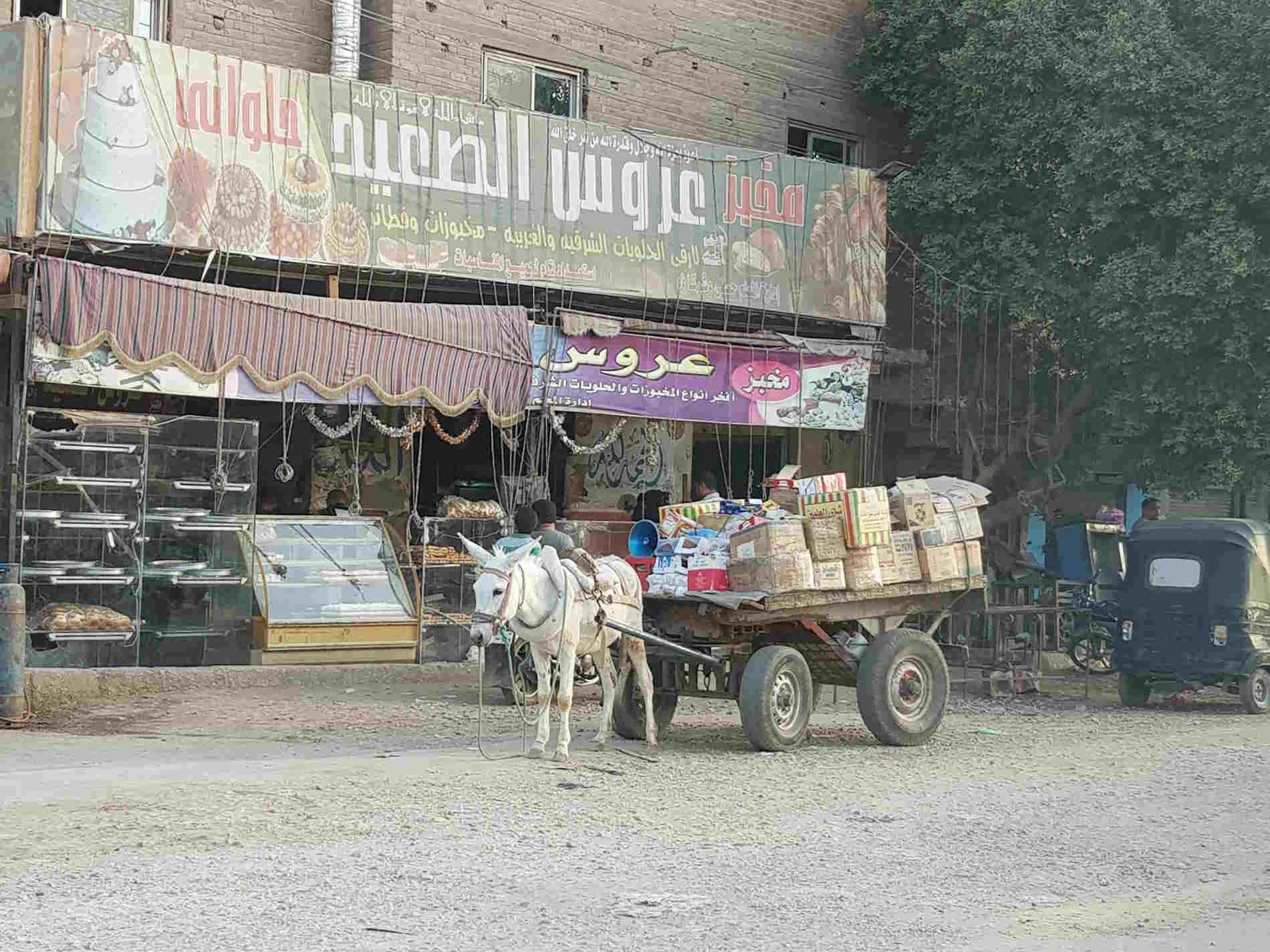 Vita rurale nei dintorni di Luxor crocira sul Nilo