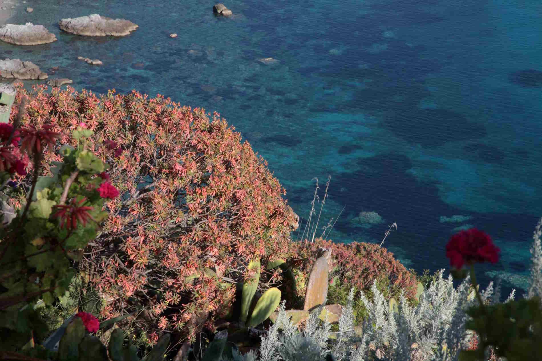 Profumi di Calabria dalla Macchia mediterranea di capo Vaticano Acqua degli Dei mediterranean Essence