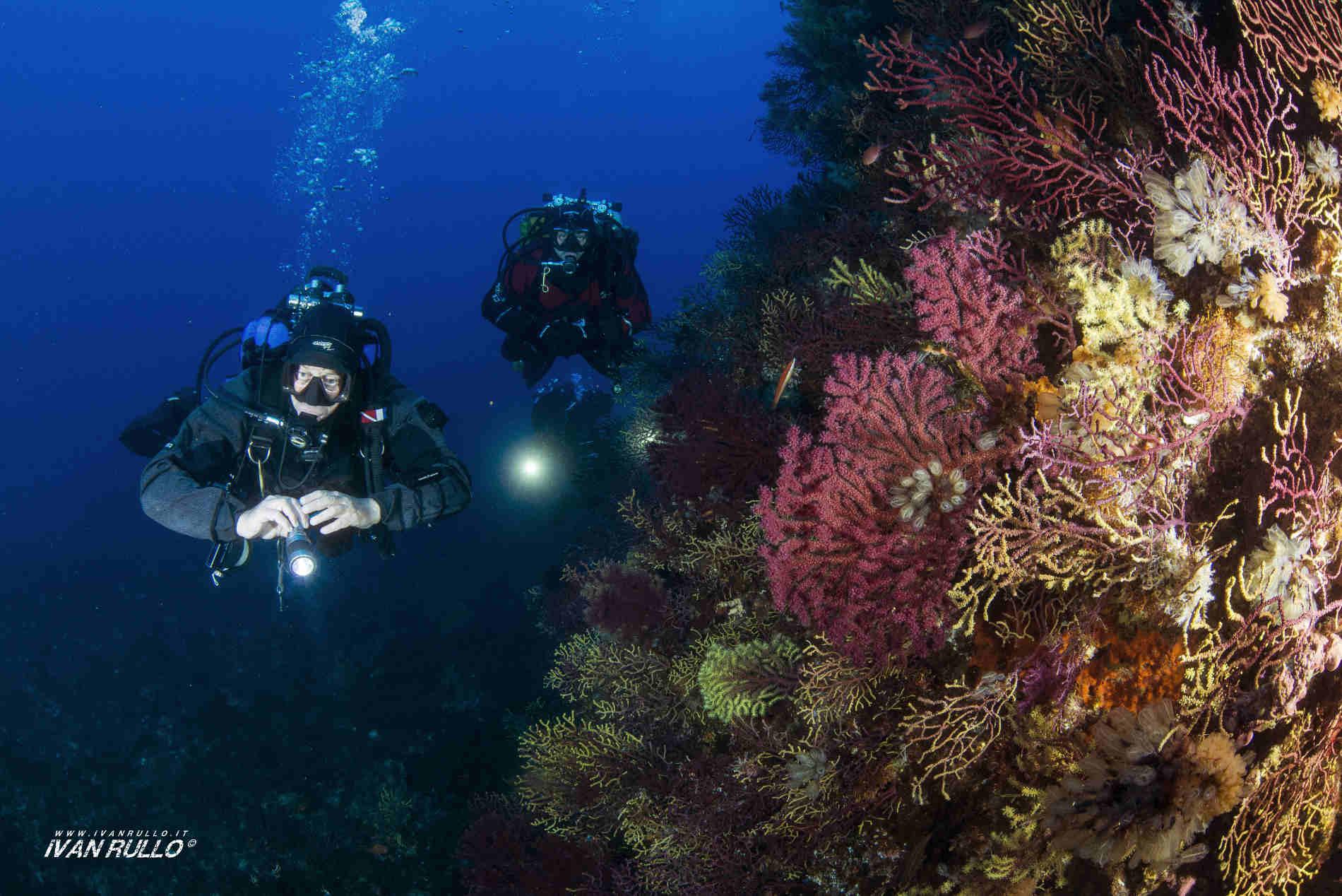 4 Immersioni imperdibili in Calabria a Scilla i colori delle Gorgonie