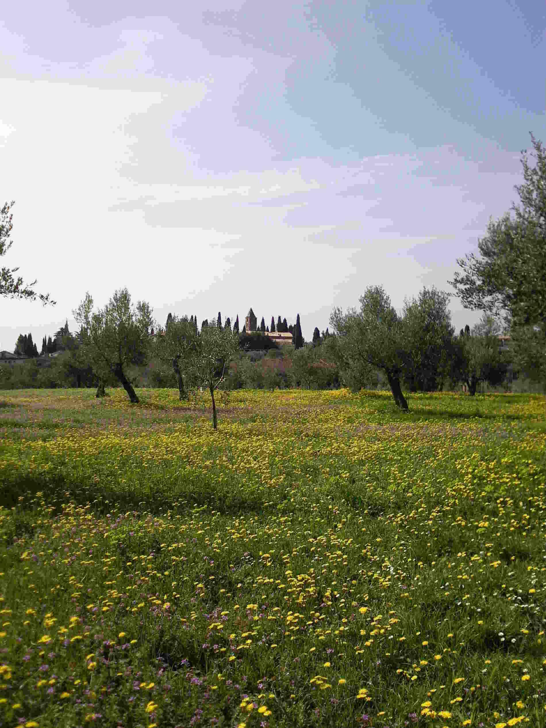 lago di Garda- Cosa fare e vedere a Sirmione Le campagne intorno alla Chiesetta di San Pietro in Mavinas