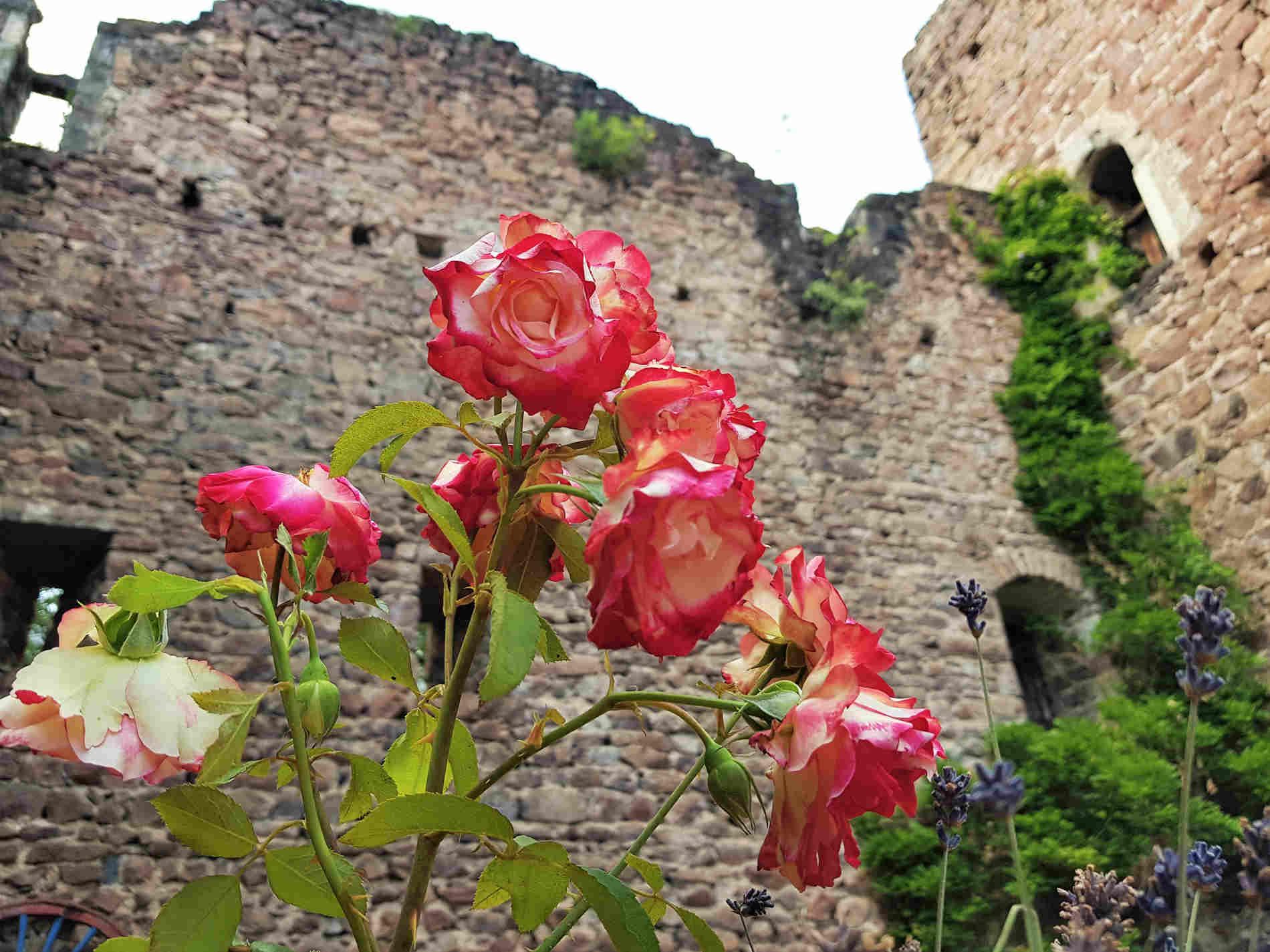 passeggiata ai 3 Castelli di Appiano Castel Boymont
