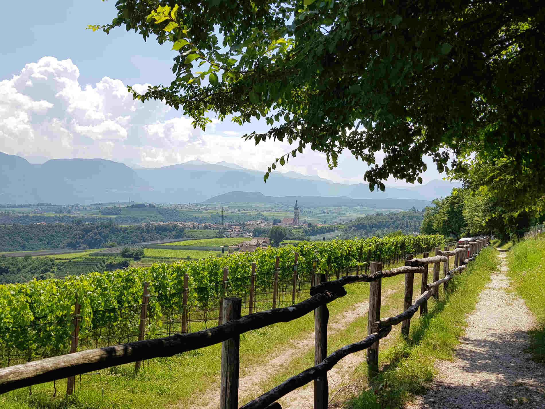Vigneti vicino Castel Corba a Missiano Appiano in Alto Adige