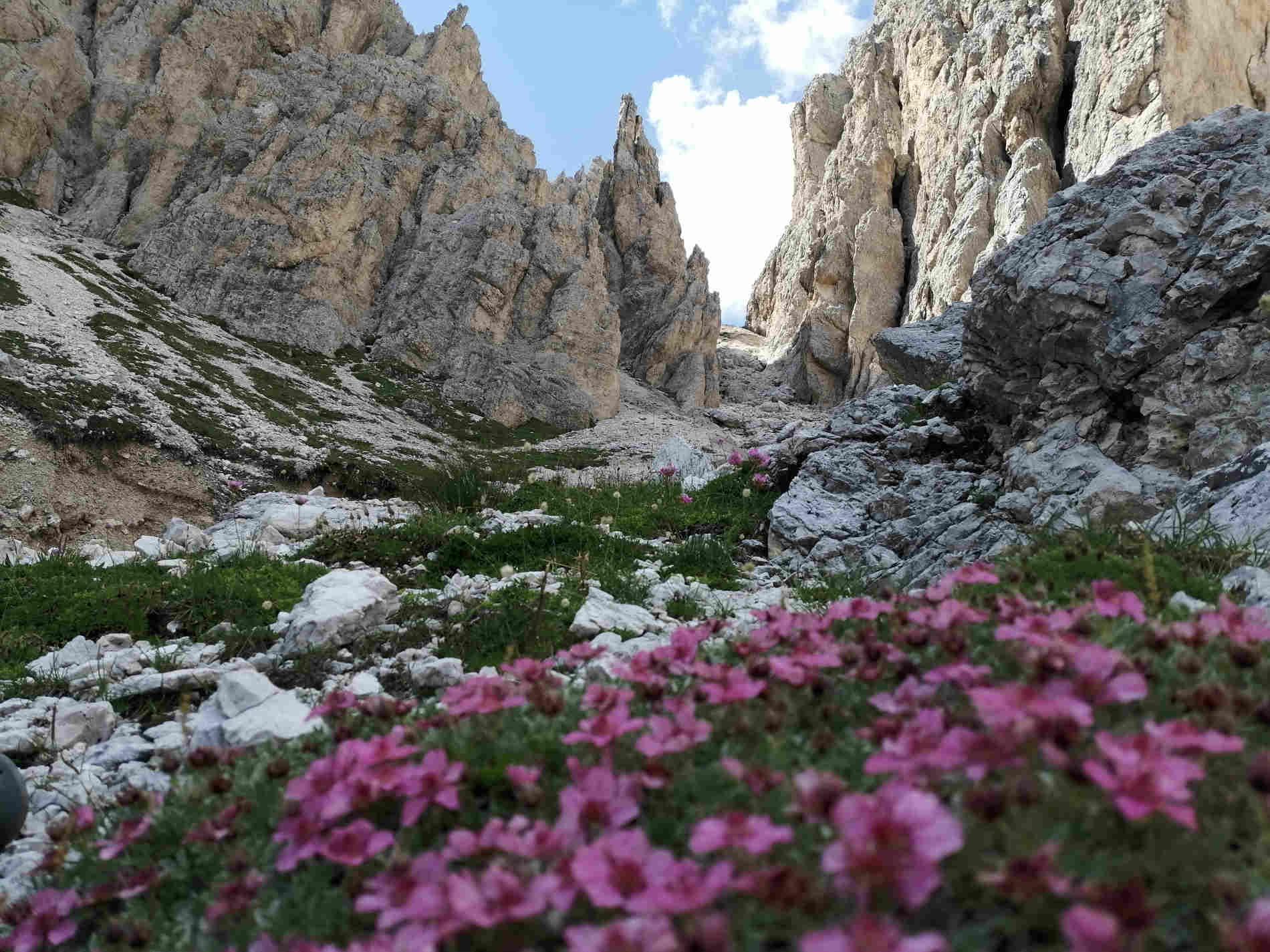 Dolomiti sito UNESCO italiano panorama vallate a primavera con fiori