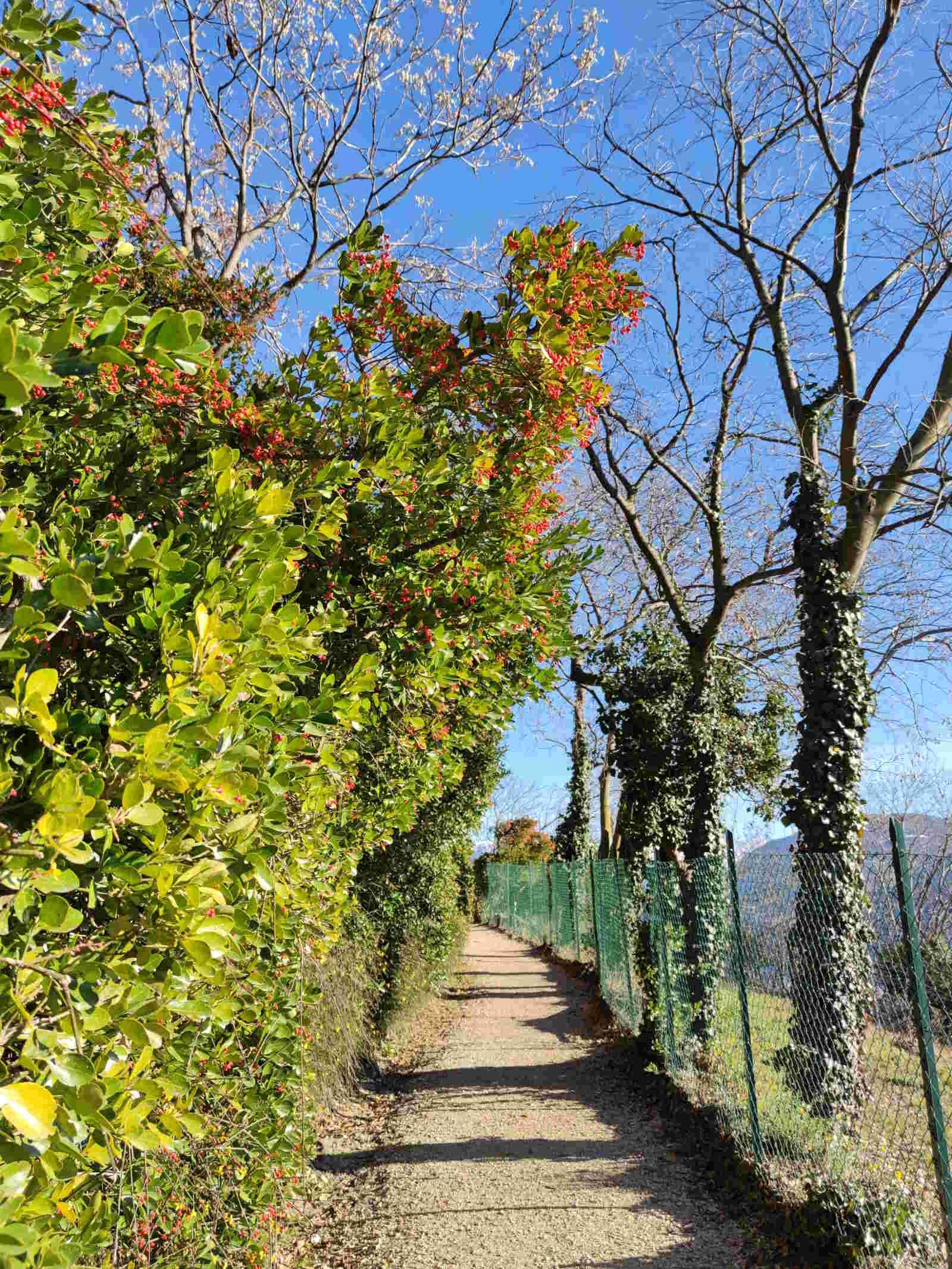 Flora lungo la passeggiata del Guncina, il sentiero che da Gries porta al Talvera A Bolzano