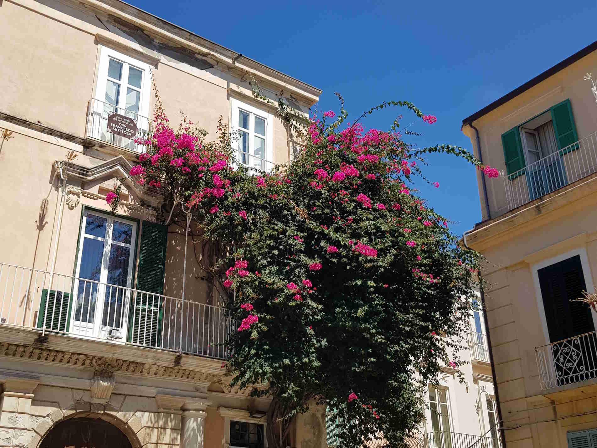 Vie del Borgo di Tropea e fiori - borgo in Calabria Italia