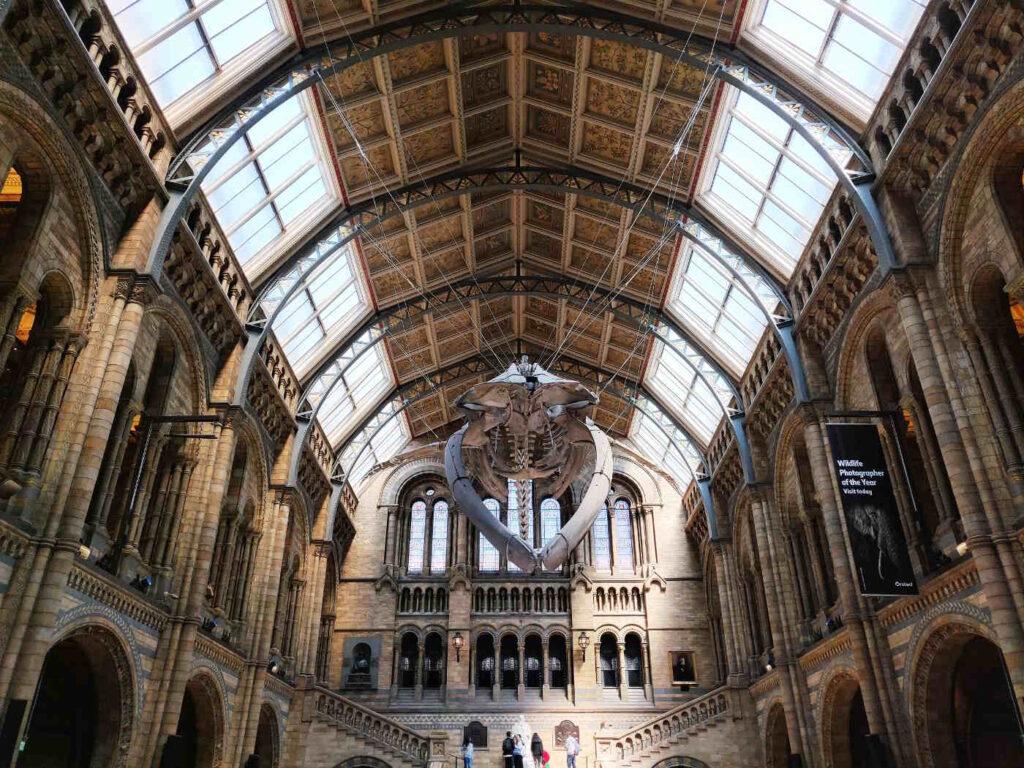 Musei europei da visitare - Unico nel suo genere, il Museo di Storia Naturale di Londra - Scheletri sospesi