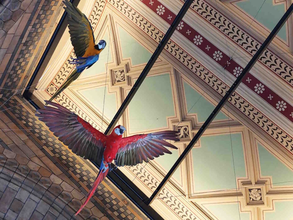 Musei imperdibili da visitare in Europa - Le meraviglie del Museo di Storia Naturale di Londra