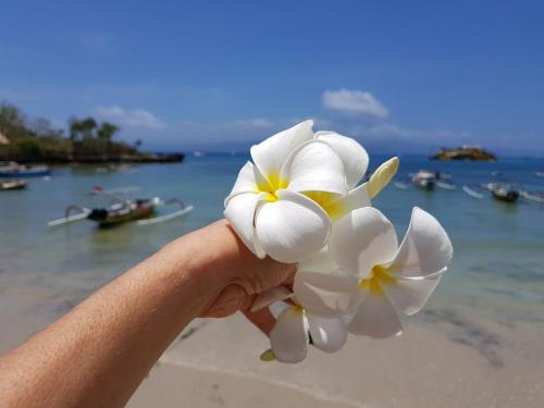 profumi indimenticabili da Nusa Lembongan